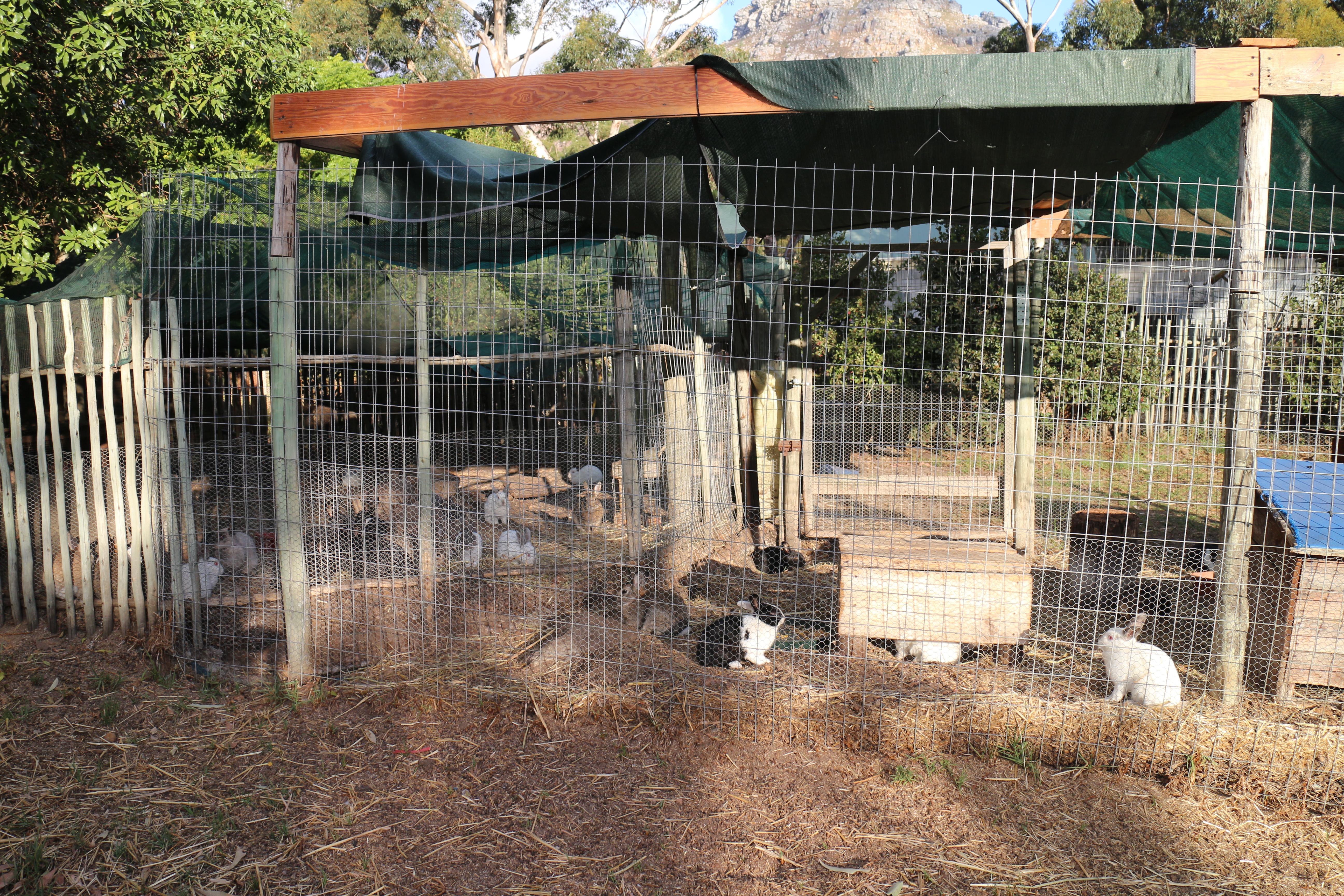 Klettergerüst Ziegen : Nadira 10 u2013 african family farm in 365 tagen um die welt