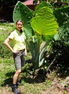 10.4-große-Blätter