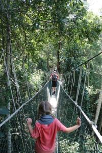 11.1-Canopy-Walk