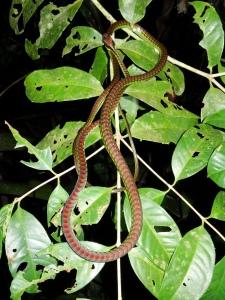 9.3-Nachtwanderung-Schlange