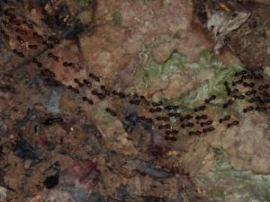 9.5-Nachtwanderung-Termiten