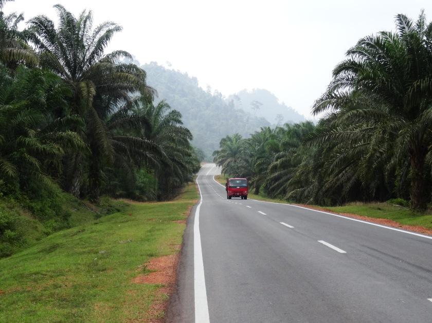 1.2-Fahrt-durch-Palmöl-Plantagen