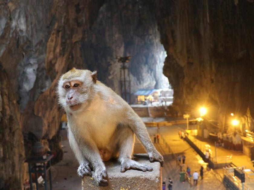 2.5-Batu-Caves-Makake