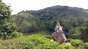 3.3-Kinder-auf-Stein-in-Teeplantage