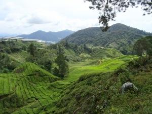 3.4-Teeplantage